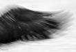 fotos-blanco-y-negro-1-1